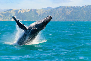 delphinen schwimmen europa